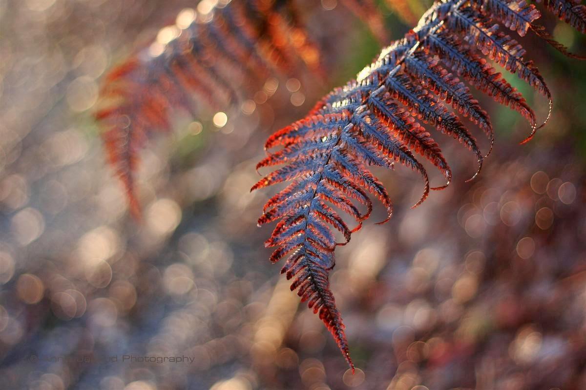 ferns, light