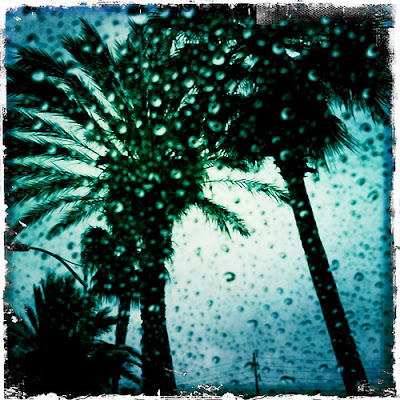 Karina's iphoneography: Rain Palm