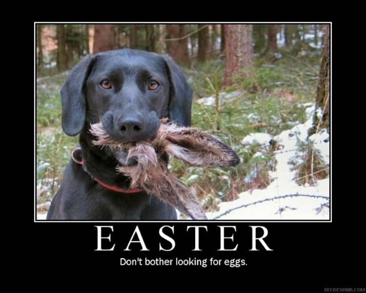 easter+bunny+funny+dog+easter.jpg