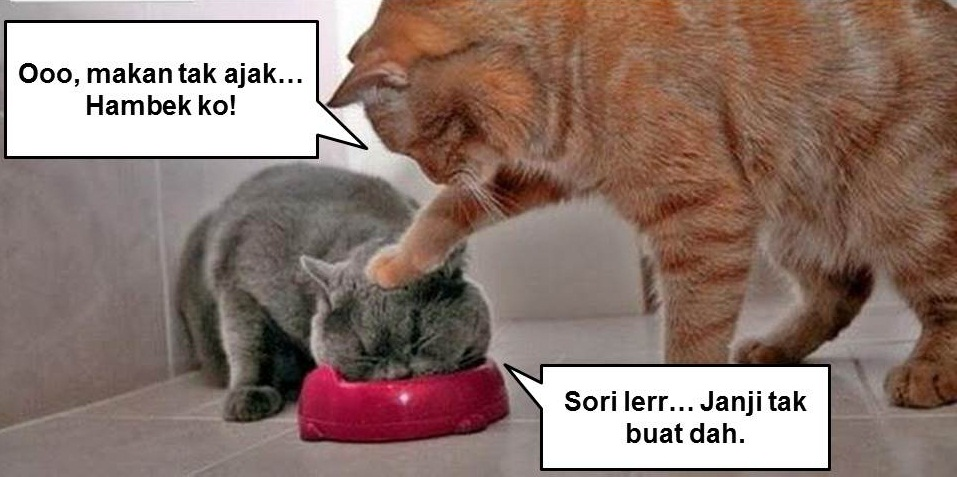 gambar kucing lawak giler - gambar kucing