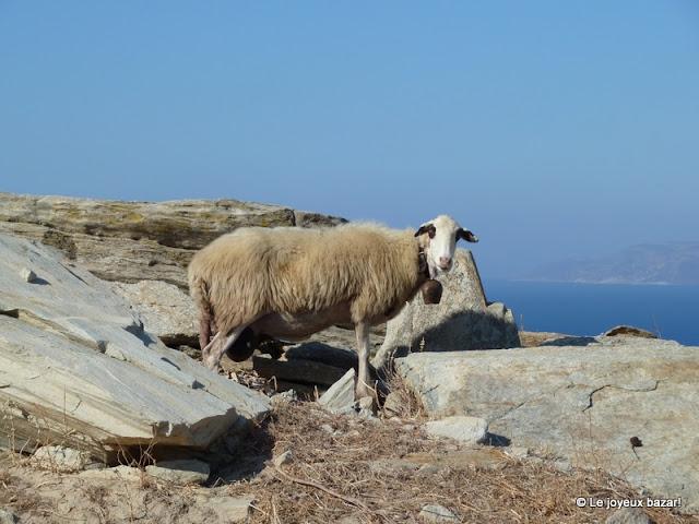 Mouton à Ios