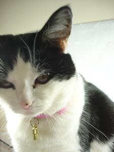 Mia-Cat