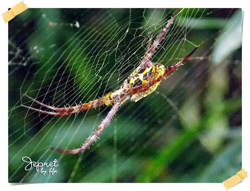 fungsi khusus jaring laba-laba