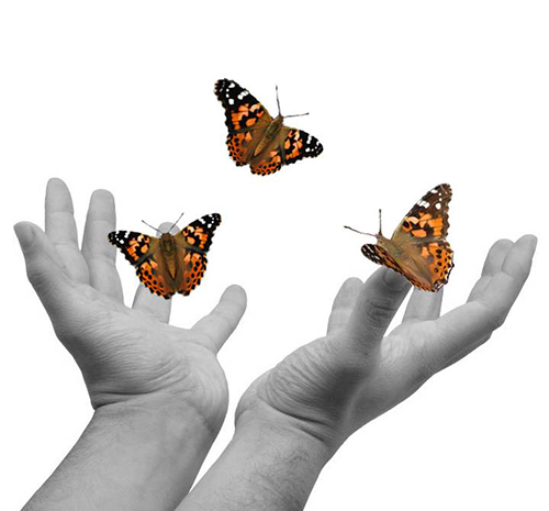 Handful of butterflies