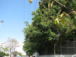 Análise de Risco para poda de árvores