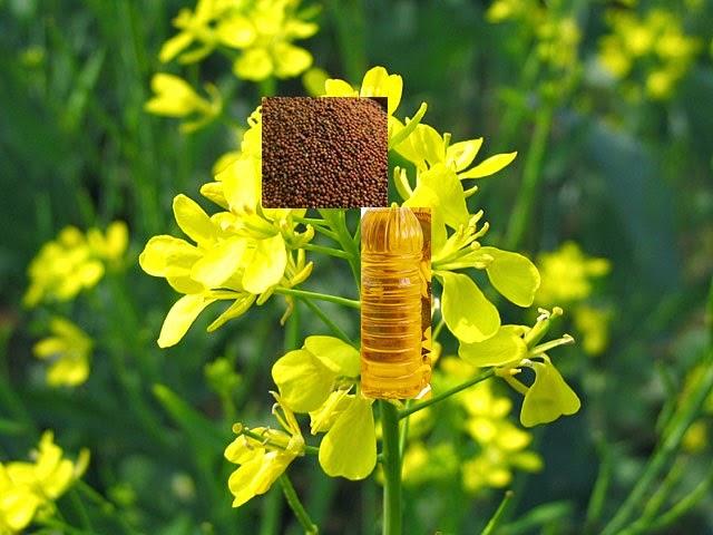 Mustard Oil Body Massage Benefits | सरसों के तेल