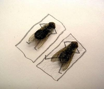 Flies Tanning