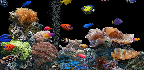 3D Aquarium Live Wallpaper HD 10