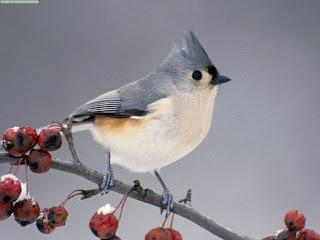download cute bird pics