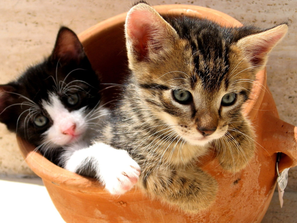 Wallpaper Gallery: Cat & Kittens Wallpaper -1
