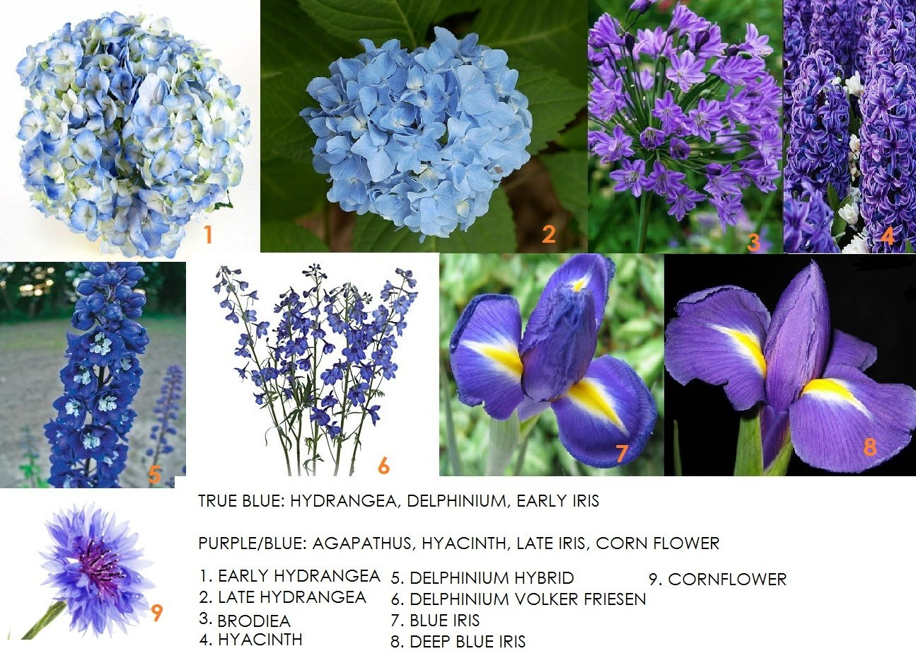 Flowers names list and pictures list of flower names list of blog created by modern petals your local calgary florist we names of blue flowers list naturally izmirmasajfo