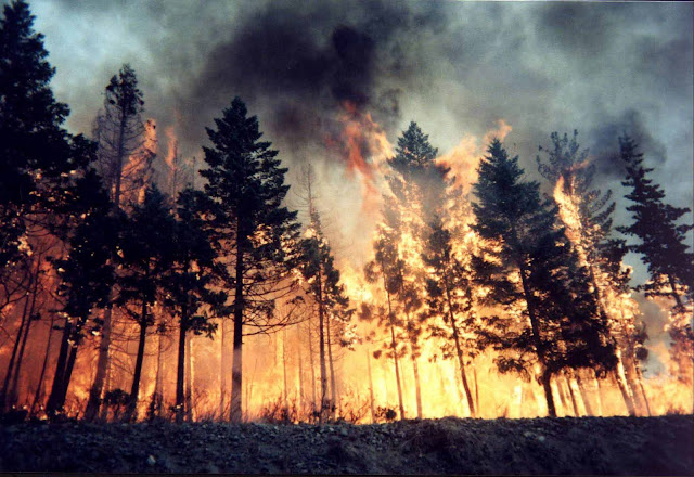 Free download pictures of wild forest fires