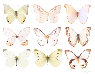 Papel de carta l minas decorativas con ilustraciones de mariposas para imprimir - Laminas decorativas para imprimir ...