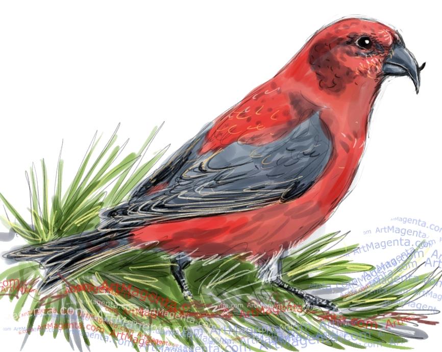 En fågelmålning av en korsnäbb från Artmagentas svenska galleri om fåglar