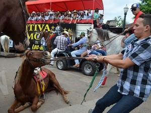 TAC prevê punição a quem maltratar animais (Foto: Rayssa Natani/ G1)