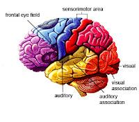 Brain Information