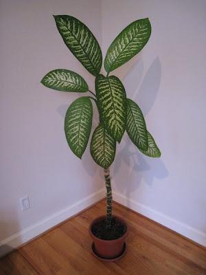 Bizarre But Deadly Plants Seen On www.coolpicturegallery.us