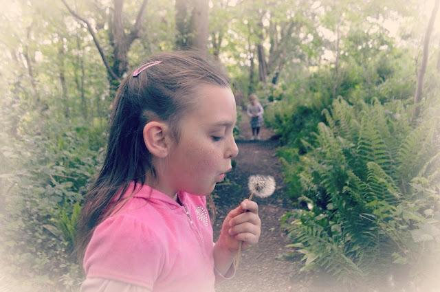 Dandelion Clock make a Wish