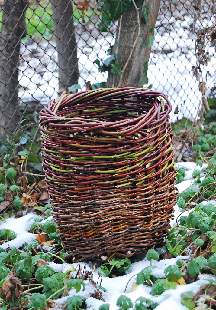 Basket Weaving Plants : The british gardener tropical years damn good