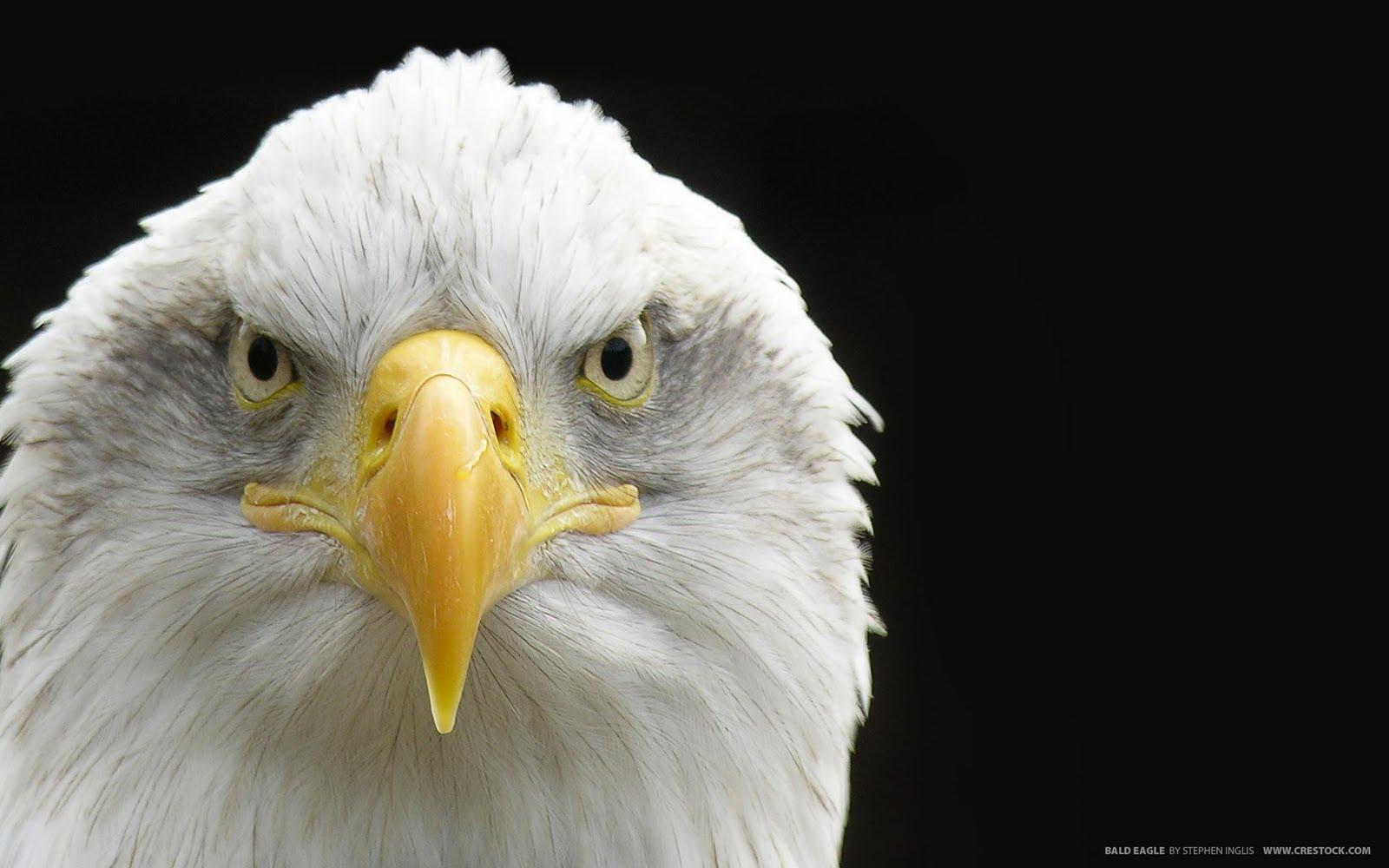 http://2.bp.blogspot.com/-SR_m9JLTVQo/TcvoUGhPFCI/AAAAAAAABgI/W3w_SdJGZtc/s1600/eagle_kartal.jpg