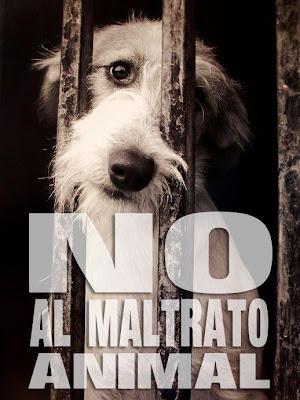 Fotos e imagenes de NO al maltrato animal