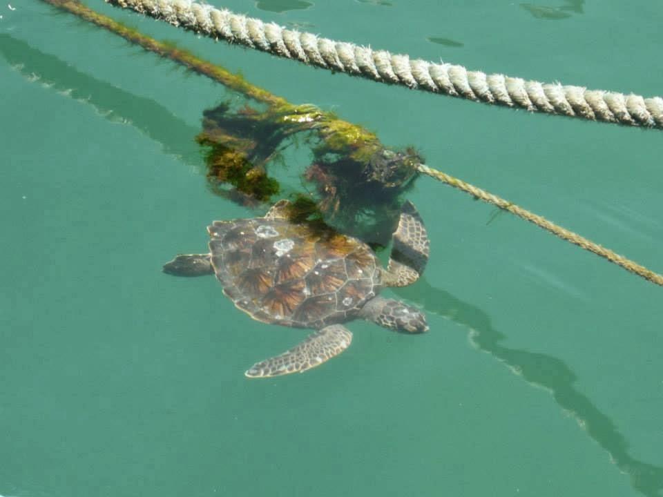 tartarugas de arraial