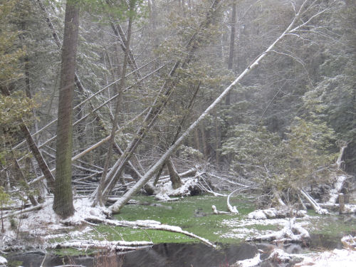 snow on Big Sable headwaters