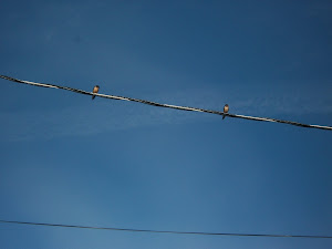 Swallows return to Saguaro Hill