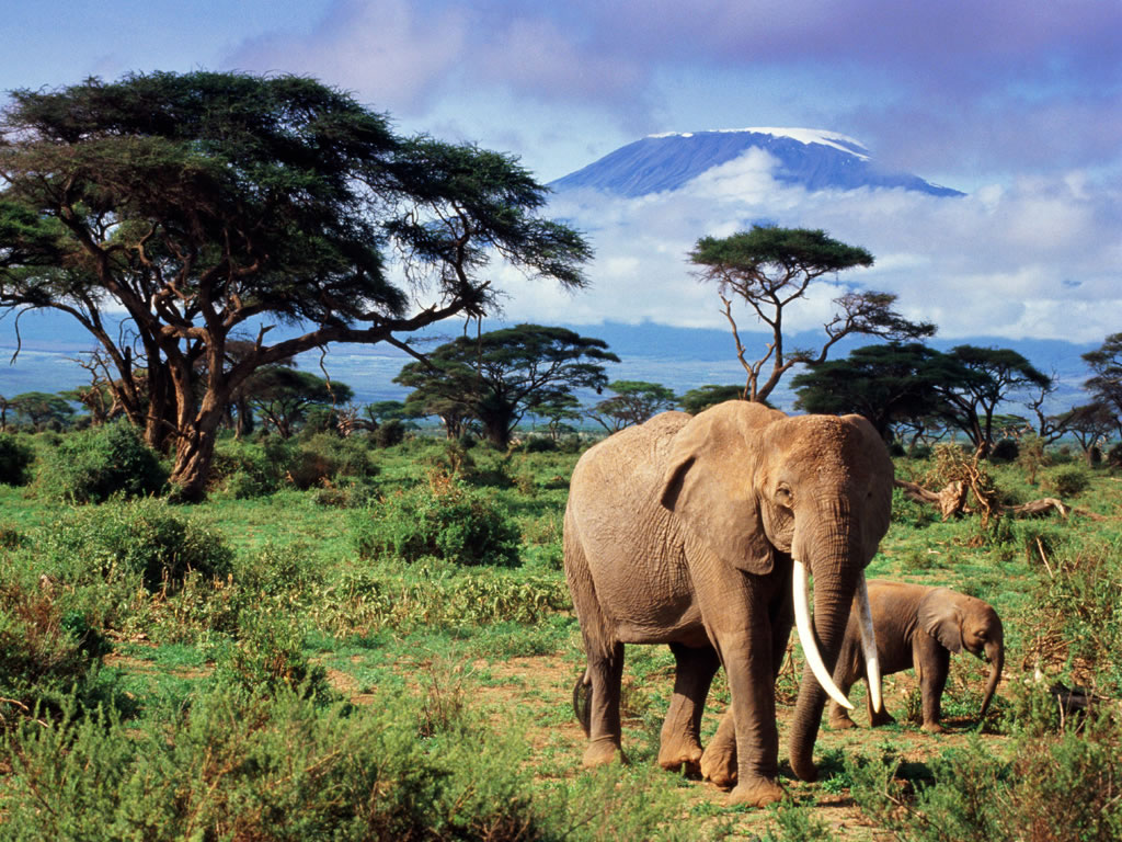 Results Wallpaper Top Elephants Pictures Elephant HD Wallpapers