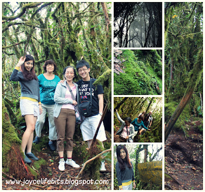 jungle trekking at moss jungle