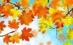 Тихо ложится осень листьями на пути