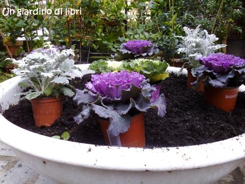 Un giardino di libri buona settimana il cavolo ornamentale for Cavolo ornamentale