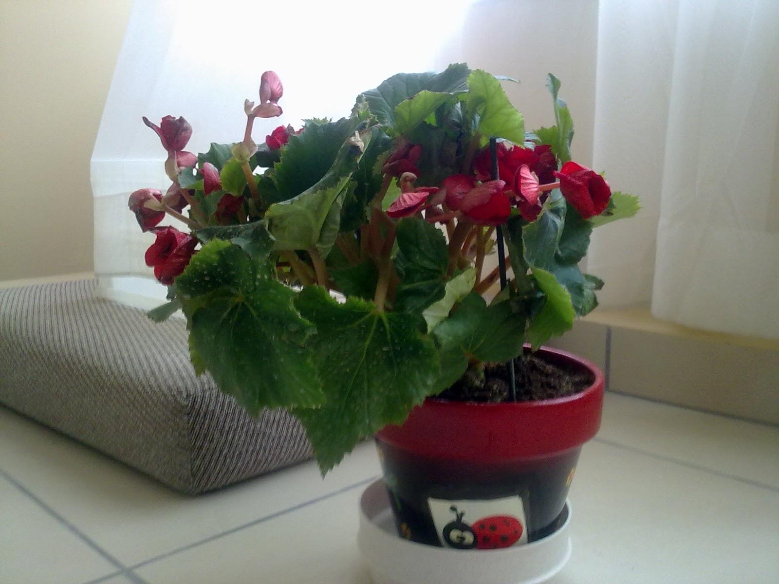 Букеты цветов герберы фото красивые