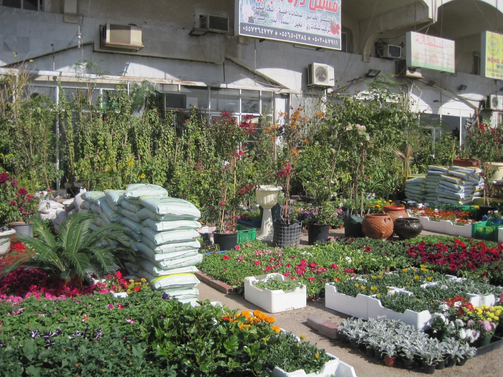 Saudi Scenes Garden Plants