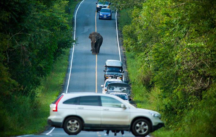 Слон идет по дороге возле машин