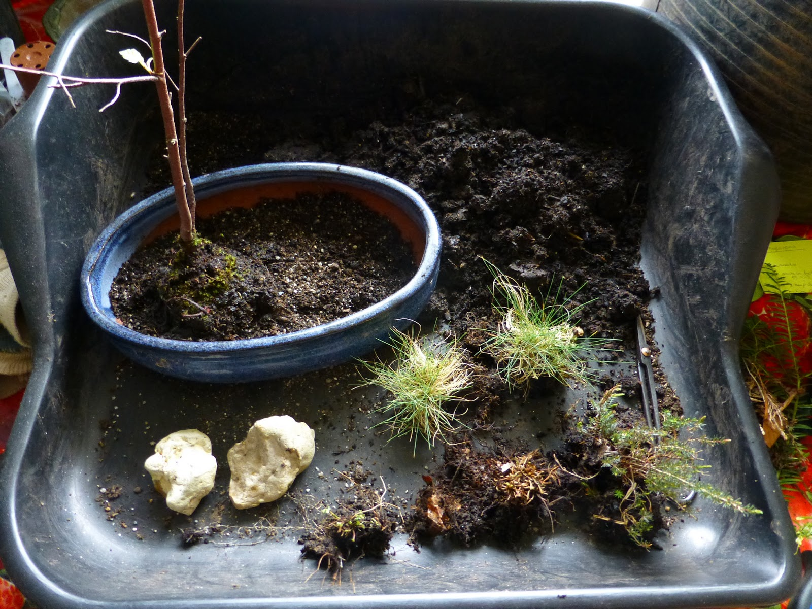 botaniquarium blog new forest bonsailandschaft. Black Bedroom Furniture Sets. Home Design Ideas