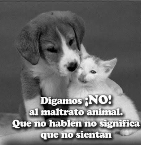 Imagenes No Al Maltrato Animal
