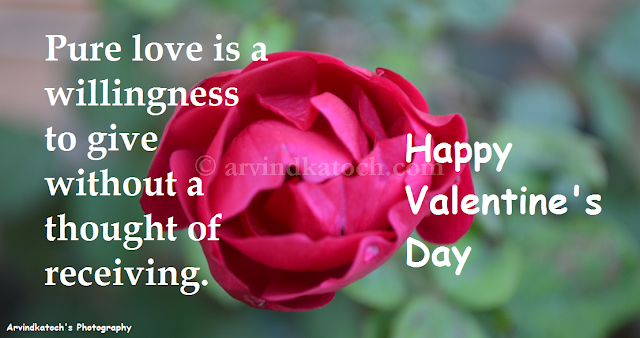 Pure love, Thought, Valentine Day, Card, HD