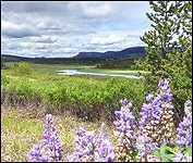 My Meadows 4