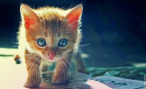 Petit chaton tout mignon