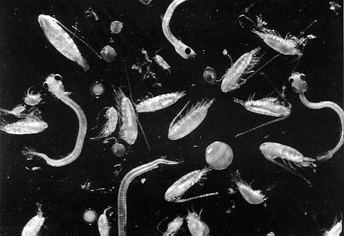 6 Misteri Kehidupan Di Bumi Yang masih Membuat Ilmuan Kebingungan