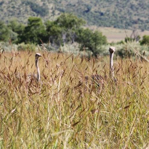 Pilanesberg NP
