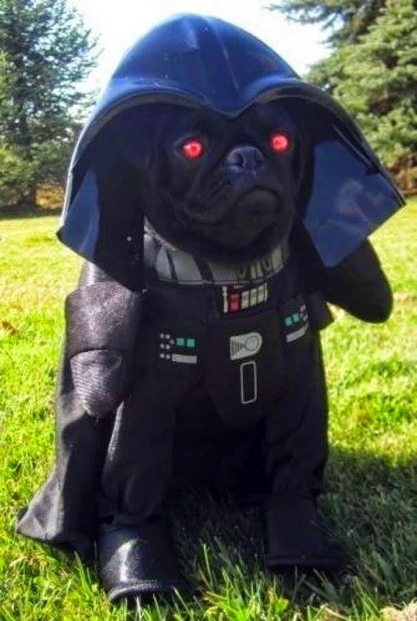 Darth Vader Dog Halloween Costume