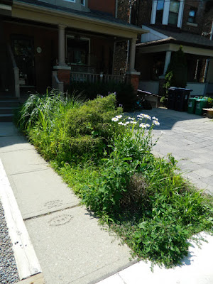Leslieville new front garden before Paul Jung Toronto Gardening Services