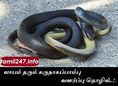 Profitable Snake growing business Joke | Laabam tharum thozhil vilambaram comedy Awareness