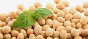 Sumber kalsium kacang kedelai