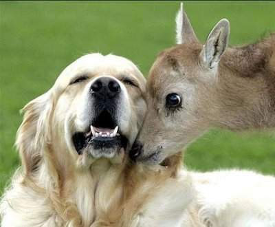 gambar lucu hewan
