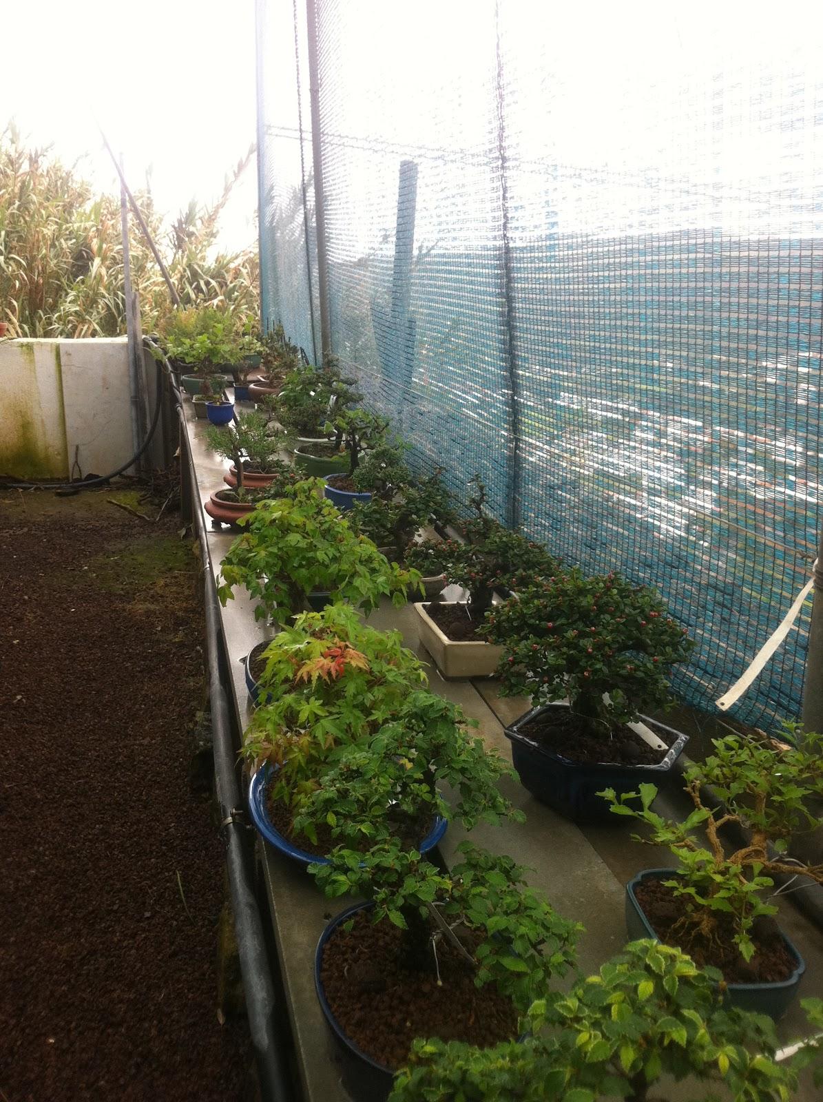 Pasi n por el shohin visita al vivero bonsai el valle for Viveros canarias