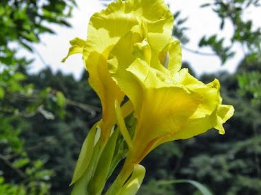 8月の田舎暮らし物件探しで見付けた花