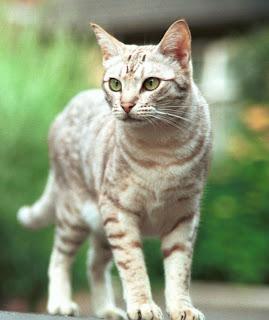 rahasia-mata-kucing